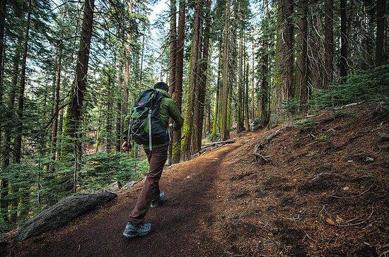 Darjeeling día privado de caminata