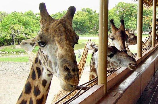 Bangkok Safari World Tour &amp...