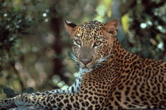 Parc national de Yala Aventure de...