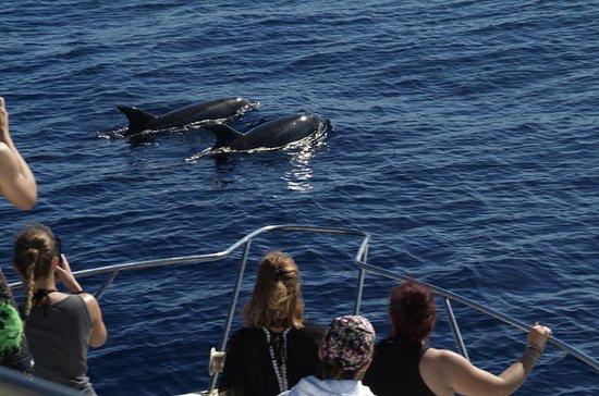Avistamiento de ballenas y delfines.