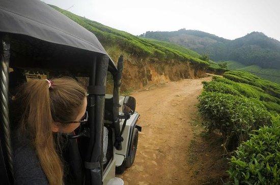 Suryanelli Trekking in Munnar