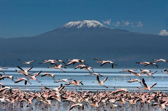 Safari de 5 dias na Tanzânia