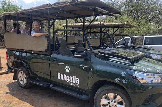 Full Day Pilanesberg Safari in Open...