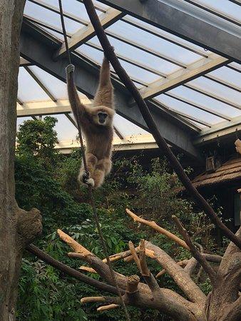 Henry Doorly Zoo: Zoo picture