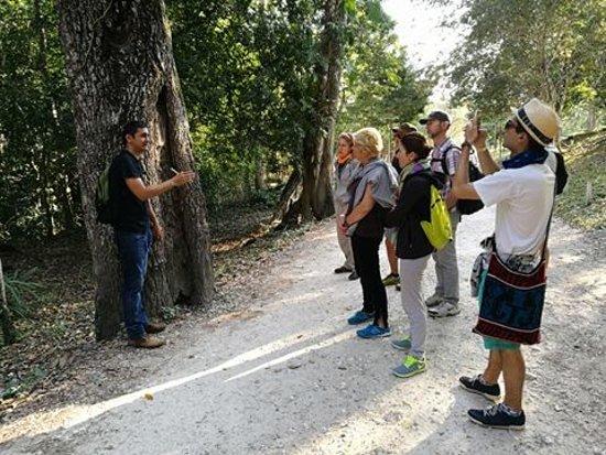 Flores, Guatemala: Empezando el recorrido al Parque Nacional Tikal, por el árbol de chico zapote.