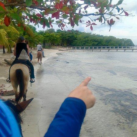 A wonderful horseback tour