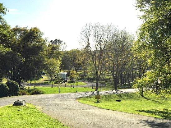 Shingle Springs Foto