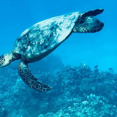Molokai Fish & Dive Center