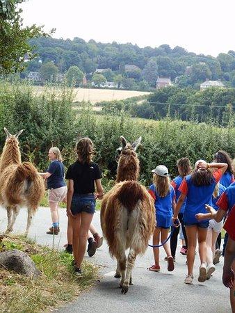 Hillview Llamas