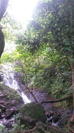 Hawaiian Waterfall Hike: Hidden waterfall