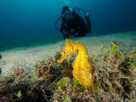 Euro-Divers Lanzarote