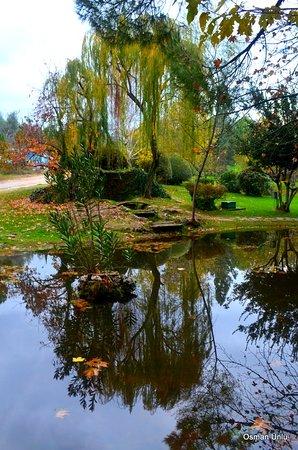Çamlık parkı