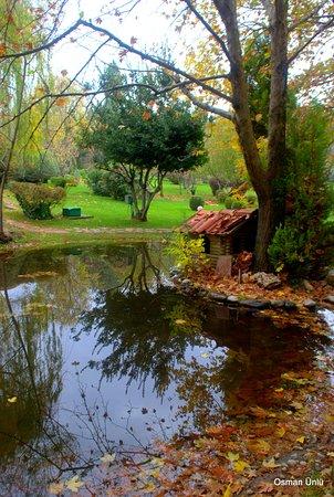 Çamlık parkında sonbahar