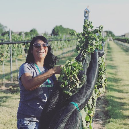 Enchantment Vineyards