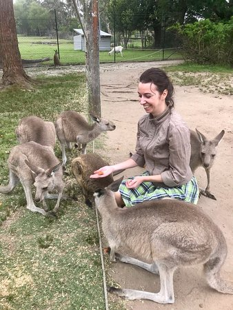 My favorite part of visiting the park was feeding and petting kangaroos :)