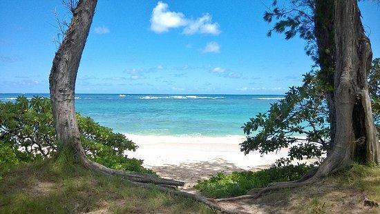Oahu's North Shore, HI: North Shore Hawaii