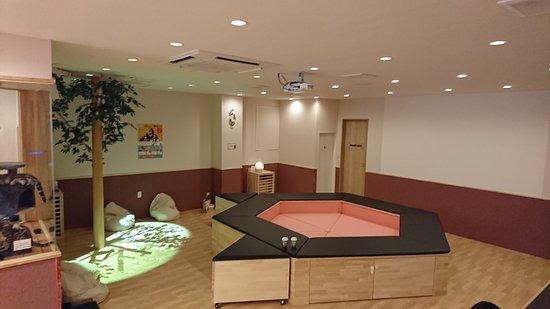 Cat Cafe Puchi Marry Kumamoto Shimotori