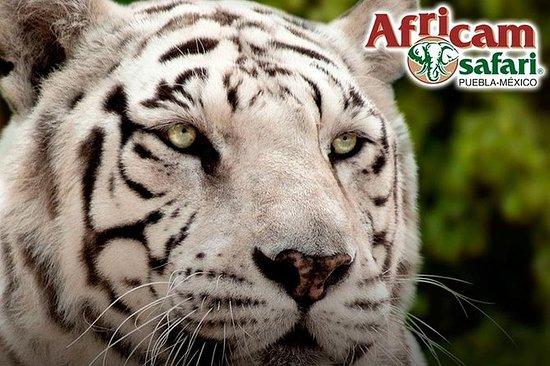 Africam Safari Zoo Admission with...