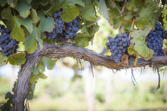 Ajude os vinhedos de Fulchino a trazer...