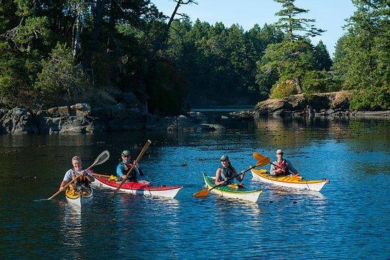 3-Hour Swartz Bay Kayak Tour and...
