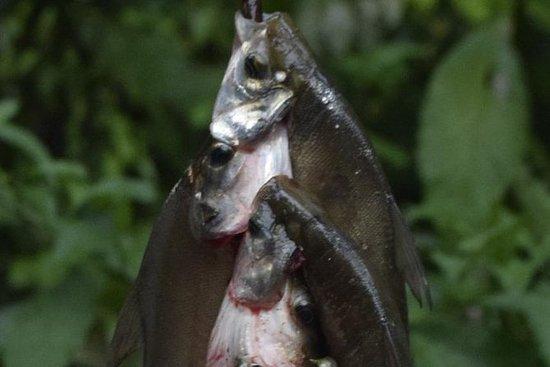 Halvdagstur: Piranha Fiske och ...