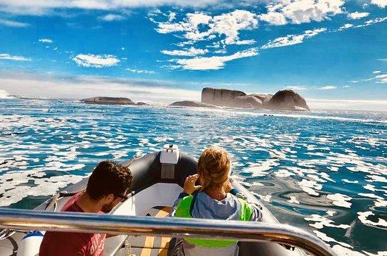 Hout Bay de barco pelo mar