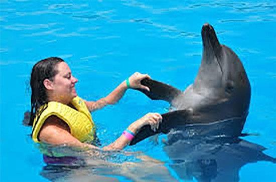 Nager avec les dauphins à Charm el...