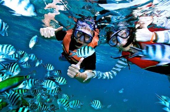 Mantanani Island Snorkeling Tour
