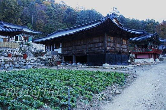 Inje-gun, Güney Kore: farm of Yeongsiam Temple