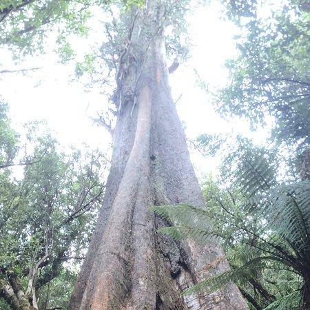 Blue tier tree walk