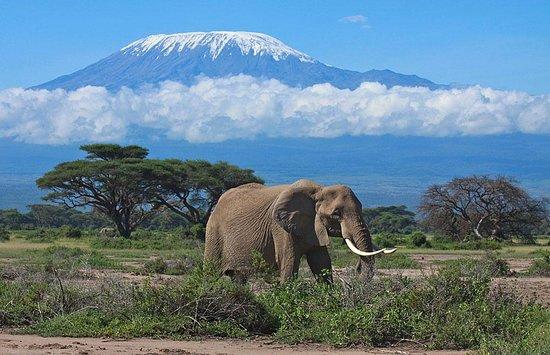 Bigzone Safaris Africa