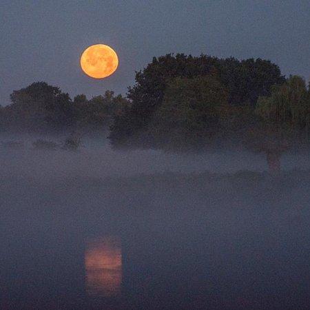 Hampton Hill, UK: Moonlit , fog covered, the deer calling...... simply magical