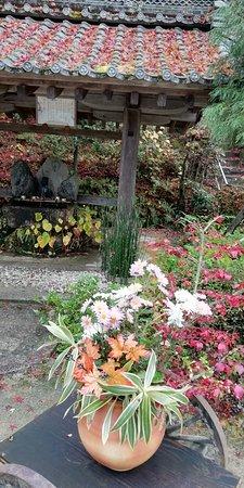 手水場前の鉢植えの草花です