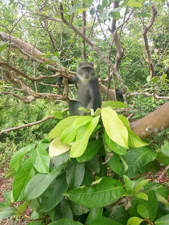Jozani Forest Reserve Half-Day Guided Tour from Zanzibar: We bring you closer to the nature