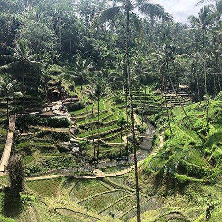 Danarta Bali Tour