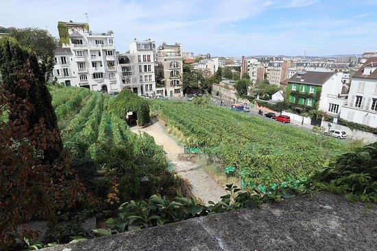 The famous Montmartre vineyard, Vignes du Clos Montmartre