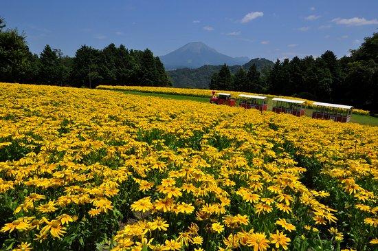 Tottori Hanakairo-Flower Park