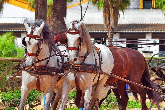 Excursión de un día a Jerez y Cádiz...