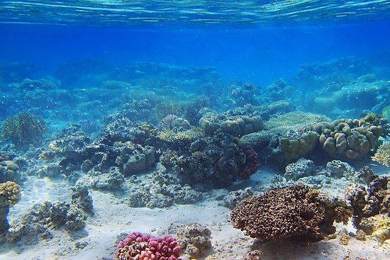 Croisière et plongée libre à l'île de...