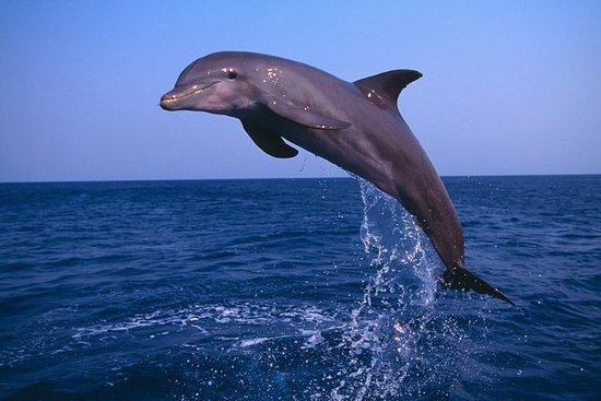 Small-Group Muscat Dolphin Watching...