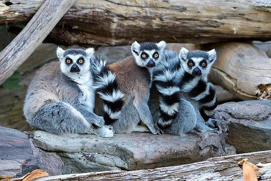 Zoo de Adelaide nos bastidores da...