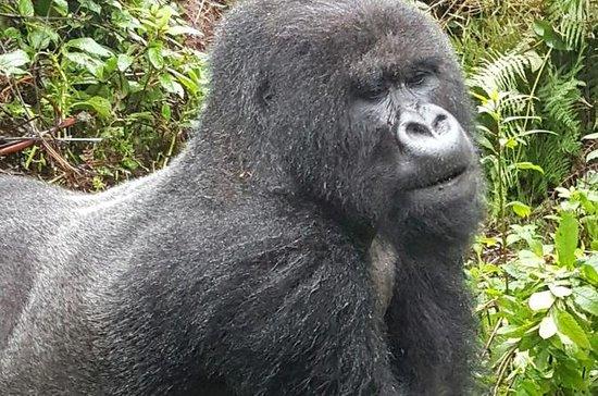3-Day Gorilla and Golden Monkey...