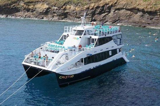 Whale Watching Cruise ombord Calypso