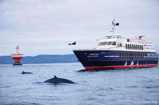 Crociera di osservazione delle balene