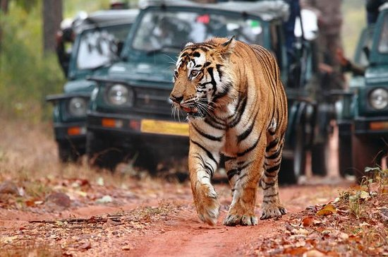 Ranthambore National Park, Safari...