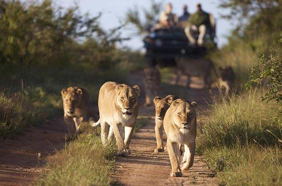 Safari de 4 dias na Reserva de Caça...