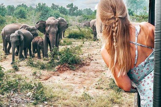 Meio dia Safari Safari Jeep Tour no...