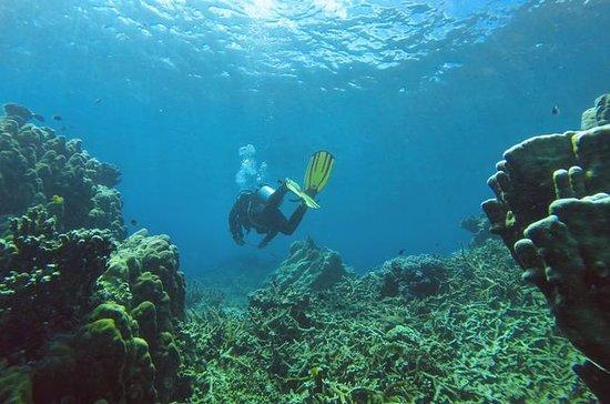 Experiencia de buceo en la isla de...