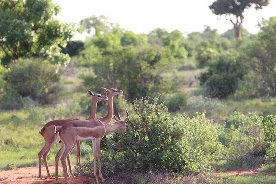 Aqua Paradise Safaris Day Tours: Antilopen