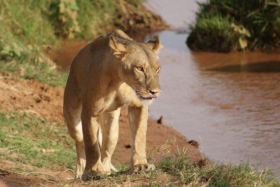 Wild Streamer Tours & Travel Safaris